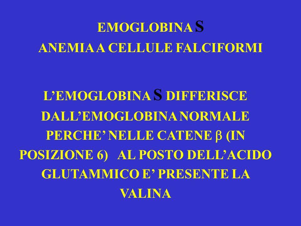 EMOGLOBINA S ANEMIA A CELLULE FALCIFORMI LEMOGLOBINA S DIFFERISCE DALLEMOGLOBINA NORMALE PERCHE NELLE CATENE (IN POSIZIONE 6) AL POSTO DELLACIDO GLUTA