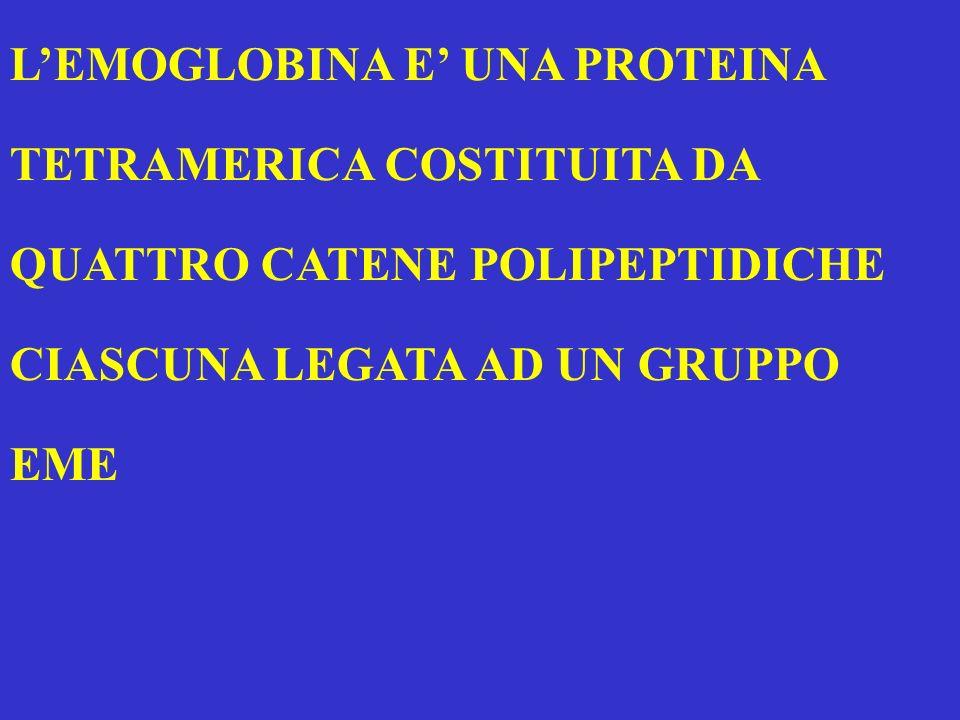 LA MIOGLOBINA E COSTITUITA DA UNA CATENA DI 153 AMMINOACIDI (STRUTTURA PRIMARIA) CHE SI SVILUPPA NELLO SPAZIO FORMANDO OTTO ELICHE (STRUTTURA SUPERSECONDARIA) ORGANIZZATE IN UN UNICO DOMINIO (STRUTTURA TERZIARIA)