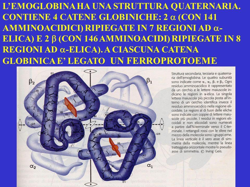 Modifiche conformazionali dellHb conseguenti allossigenazione Blu forma T deossiHb Rossa forma R ossiHb