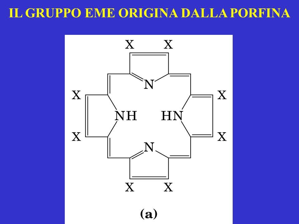 LHb è un tetramero in cui ogni subunità ha una struttura tutta ad -elica.
