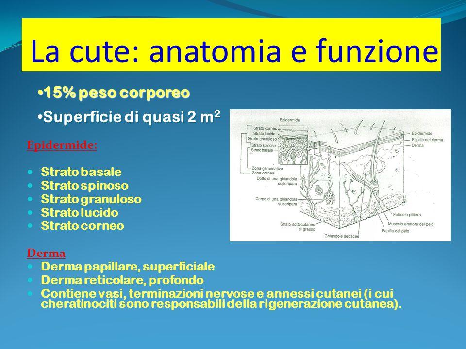 La cute: anatomia e funzione Epidermide: Strato basale Strato spinoso Strato granuloso Strato lucido Strato corneo Derma Derma papillare, superficiale