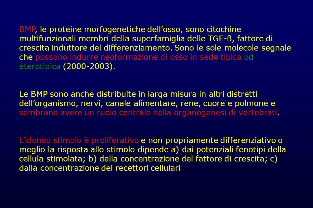 BMP, le proteine morfogenetiche dellosso, sono citochine multifunzionali membri della superfamiglia delle TGF-ß, fattore di crescita induttore del dif
