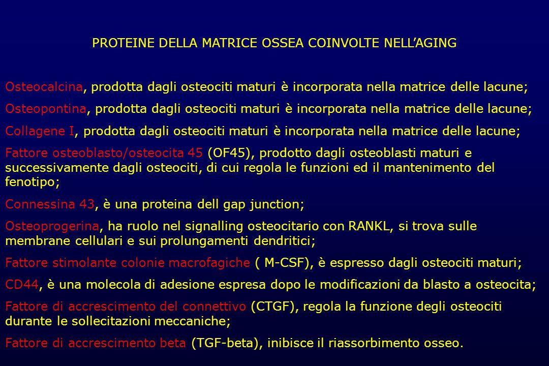 PROTEINE DELLA MATRICE OSSEA COINVOLTE NELLAGING Osteocalcina, prodotta dagli osteociti maturi è incorporata nella matrice delle lacune; Osteopontina,