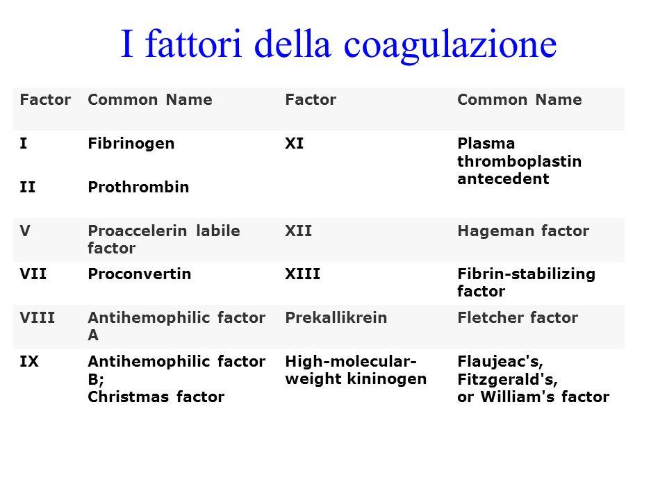 I fattori della coagulazione FactorCommon NameFactorCommon Name IFibrinogenXIPlasma thromboplastin antecedent IIProthrombin VProaccelerin labile facto