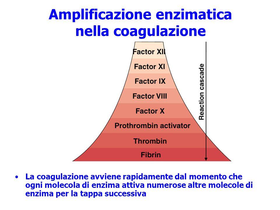 Amplificazione enzimatica nella coagulazione La coagulazione avviene rapidamente dal momento che ogni molecola di enzima attiva numerose altre molecol