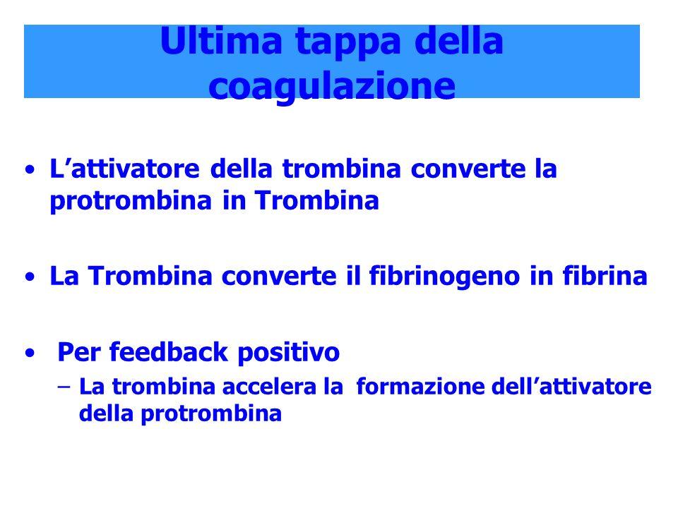 Ultima tappa della coagulazione Lattivatore della trombina converte la protrombina in Trombina La Trombina converte il fibrinogeno in fibrina Per feed