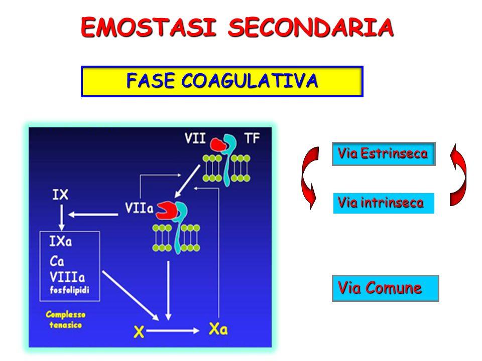 EMOSTASI SECONDARIA FASE COAGULATIVA Via Estrinseca Via intrinseca Via Comune