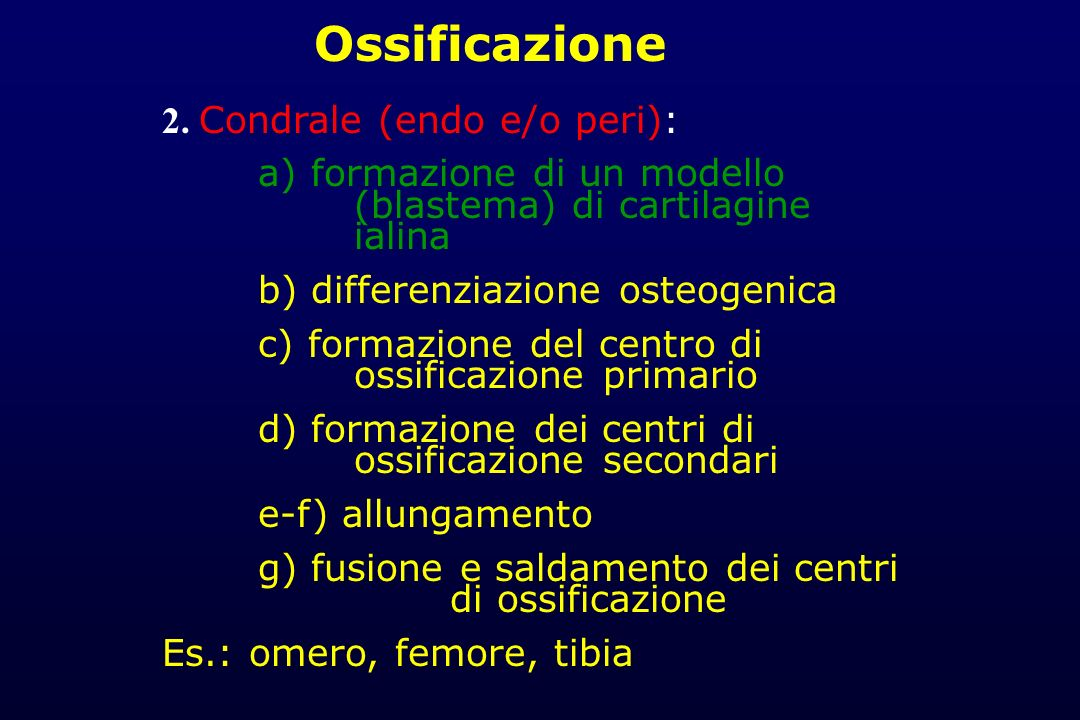 2. Condrale (endo e/o peri): a) formazione di un modello (blastema) di cartilagine ialina b) differenziazione osteogenica c) formazione del centro di