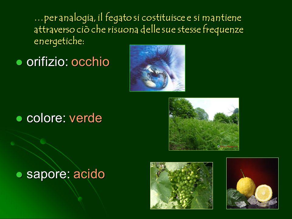 orifizio: occhio colore: verde sapore: acido …per analogia, il fegato si costituisce e si mantiene attraverso ciò che risuona delle sue stesse frequen