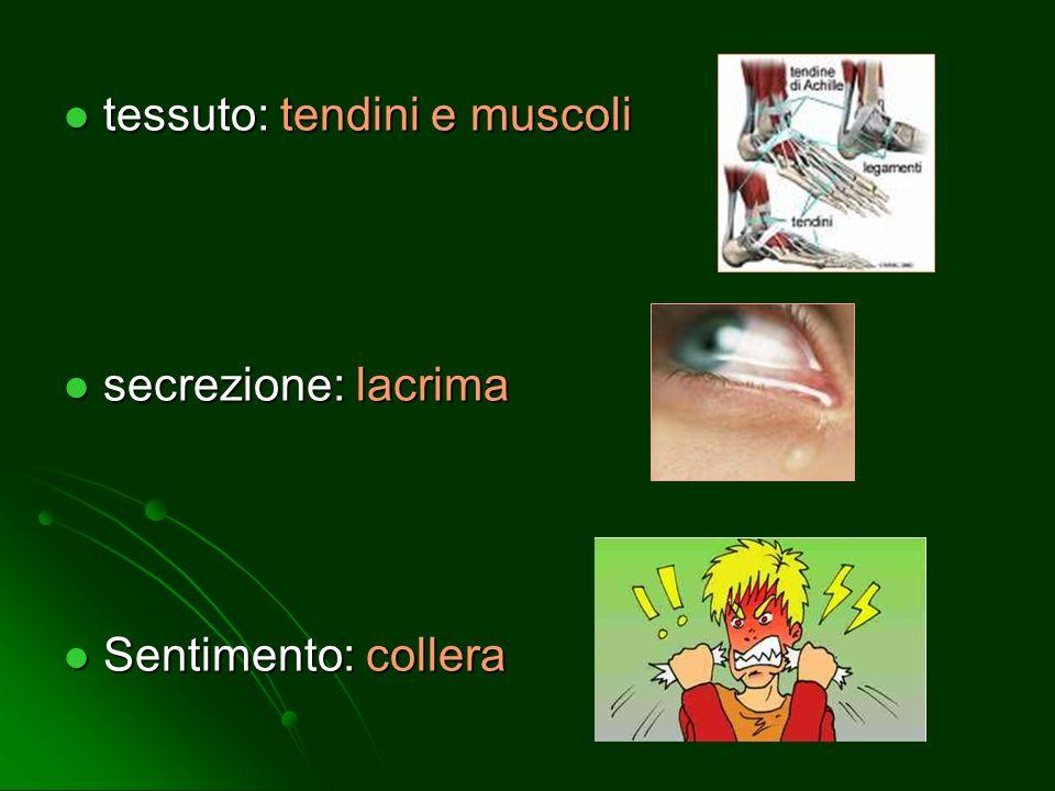 tessuto: tendini e muscoli tessuto: tendini e muscoli secrezione: lacrima secrezione: lacrima Sentimento: collera Sentimento: collera