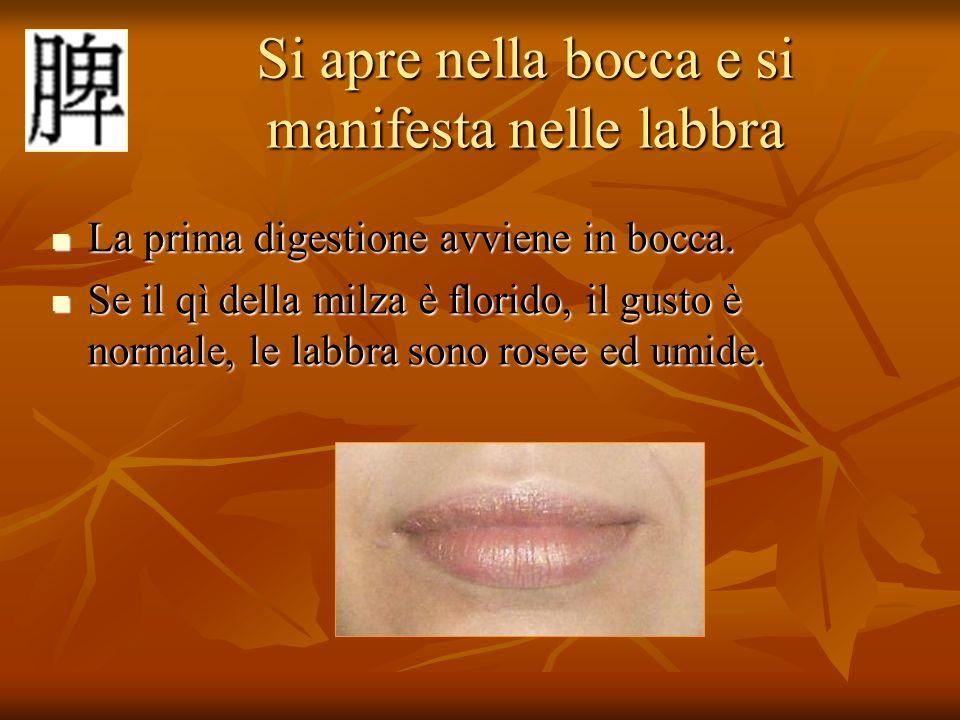 Si apre nella bocca e si manifesta nelle labbra Si apre nella bocca e si manifesta nelle labbra La prima digestione avviene in bocca. La prima digesti