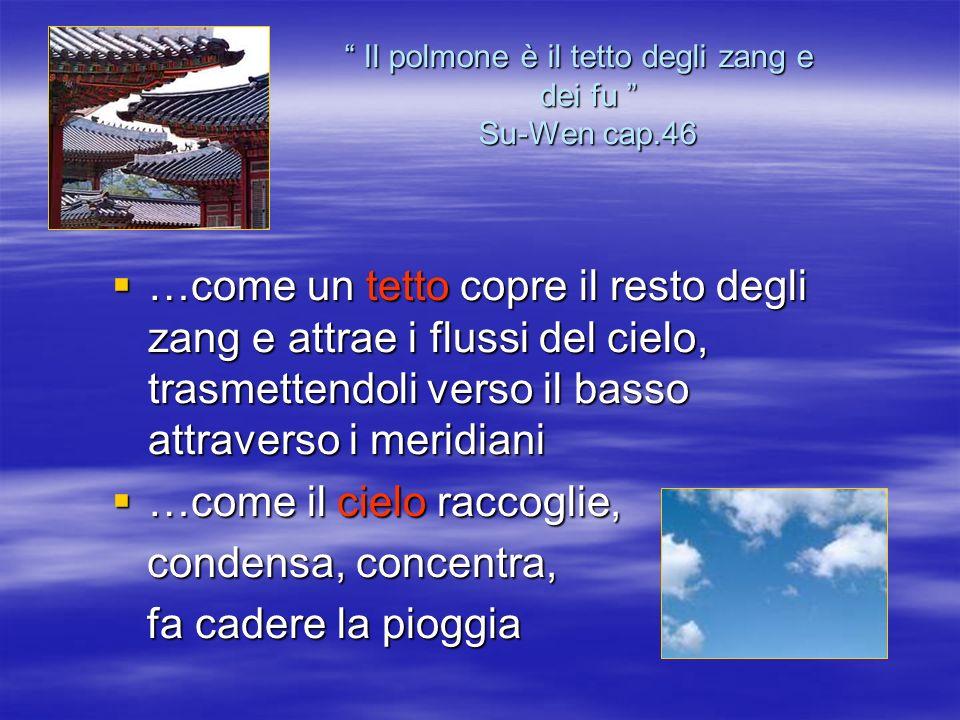 Il polmone è il tetto degli zang e dei fu Su-Wen cap.46 Il polmone è il tetto degli zang e dei fu Su-Wen cap.46 …come un tetto copre il resto degli za