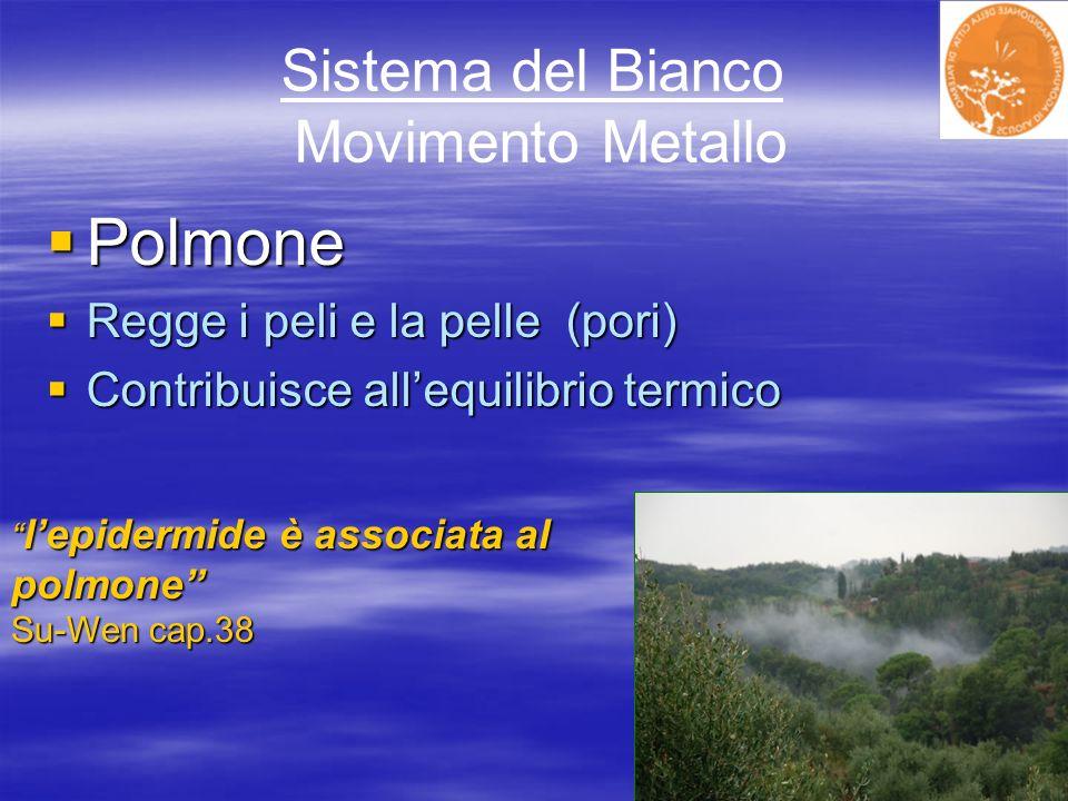 Sistema del Bianco Movimento Metallo Polmone Polmone Regge i peli e la pelle (pori) Regge i peli e la pelle (pori) Contribuisce allequilibrio termico