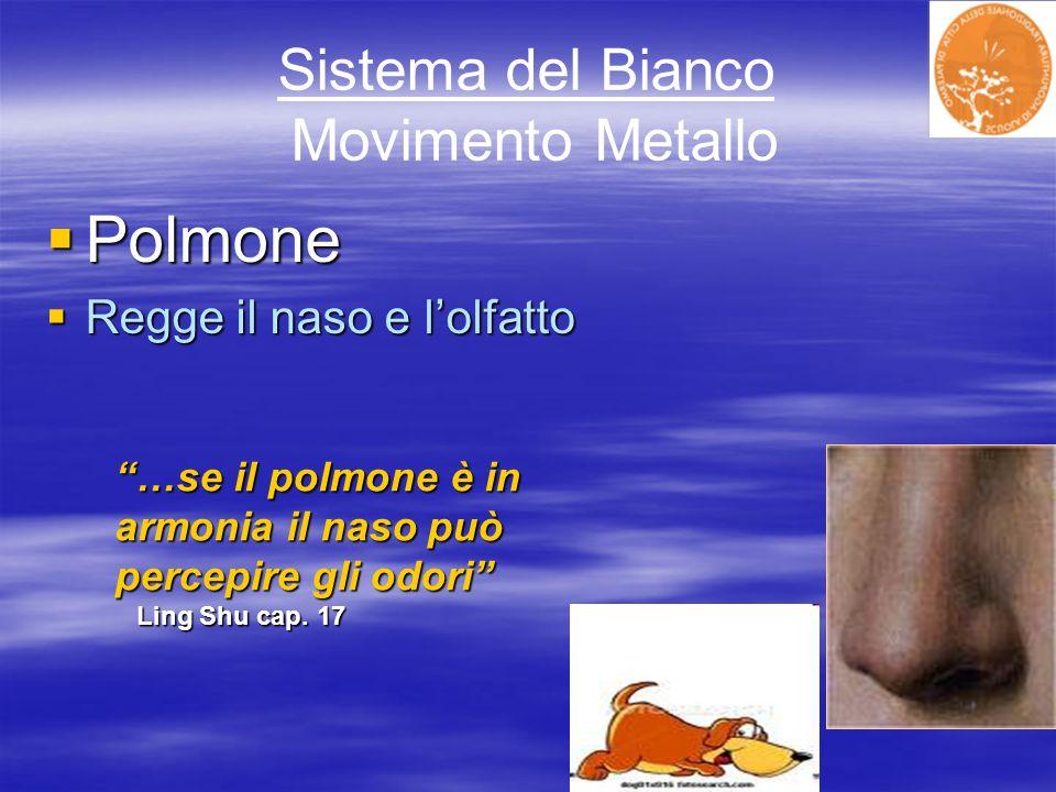 Sistema del Bianco Movimento Metallo Polmone Polmone Regge il naso e lolfatto Regge il naso e lolfatto …se il polmone è in armonia il naso può percepi