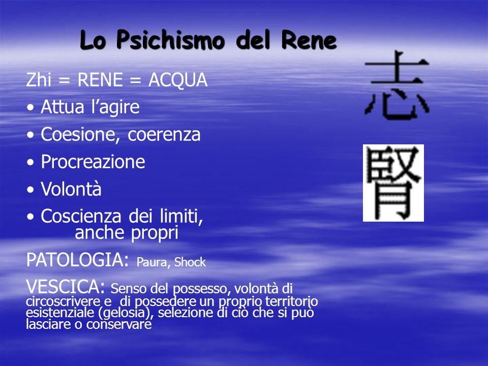 Lo Psichismo del Rene Zhi = RENE = ACQUA Attua lagire Coesione, coerenza Procreazione Volontà Coscienza dei limiti, anche propri PATOLOGIA: Paura, Sho
