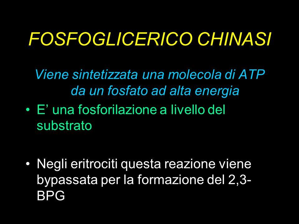 FOSFOGLICERICO CHINASI Viene sintetizzata una molecola di ATP da un fosfato ad alta energia E una fosforilazione a livello del substrato Negli eritroc