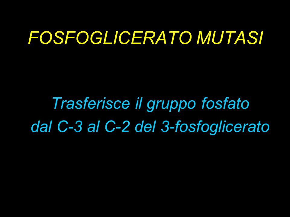 FOSFOGLICERATO MUTASI Trasferisce il gruppo fosfato dal C-3 al C-2 del 3-fosfoglicerato