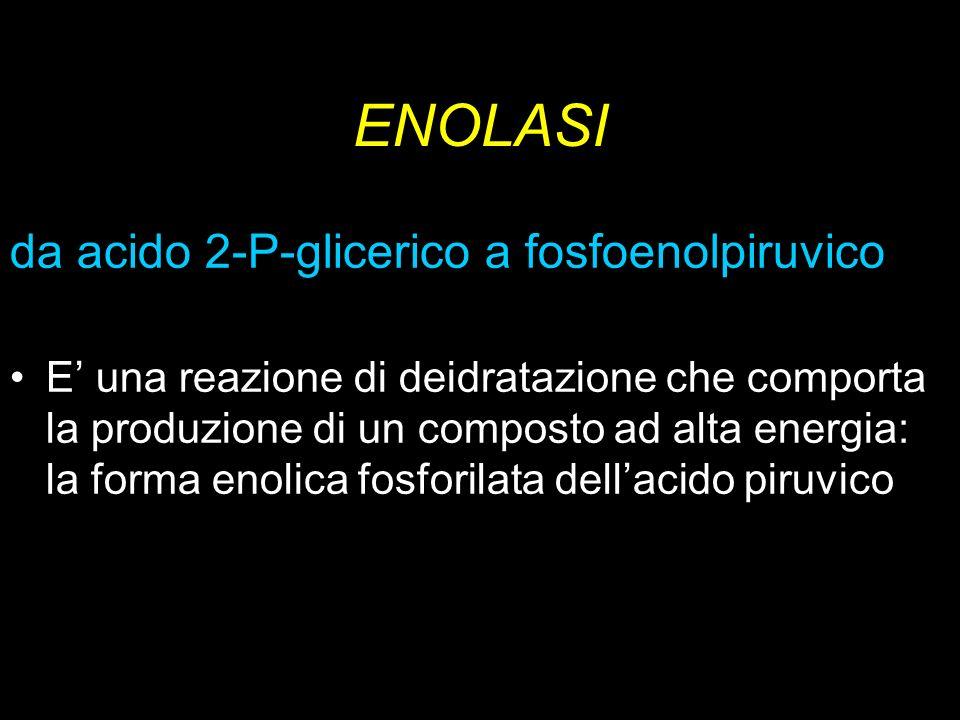 ENOLASI da acido 2-P-glicerico a fosfoenolpiruvico E una reazione di deidratazione che comporta la produzione di un composto ad alta energia: la forma