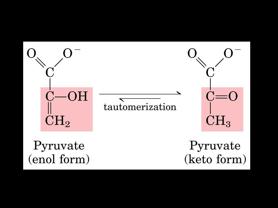 Regulation of pyruvate kinase.