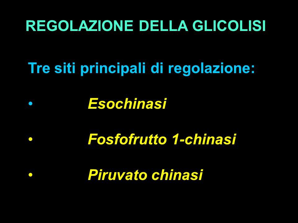 REGOLAZIONE DELLA GLICOLISI Tre siti principali di regolazione: Esochinasi Fosfofrutto 1-chinasi Piruvato chinasi