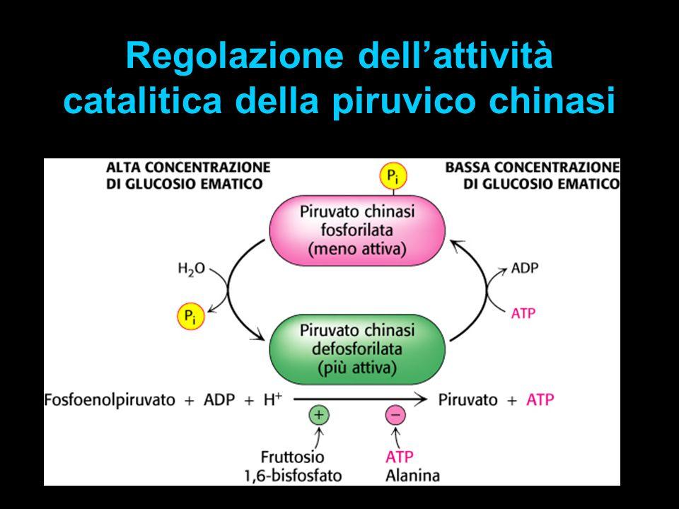 Regolazione dellattività catalitica della piruvico chinasi