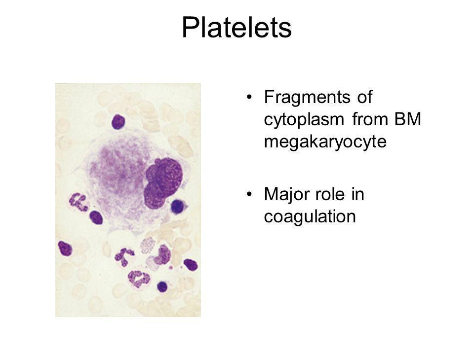 Platelets Fragments of cytoplasm from BM megakaryocyte Major role in coagulation