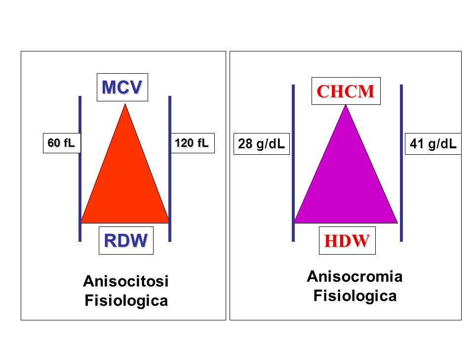 120 fL 60 fL RDW MCV Anisocitosi Fisiologica CHCM HDW 28 g/dL41 g/dL Anisocromia Fisiologica
