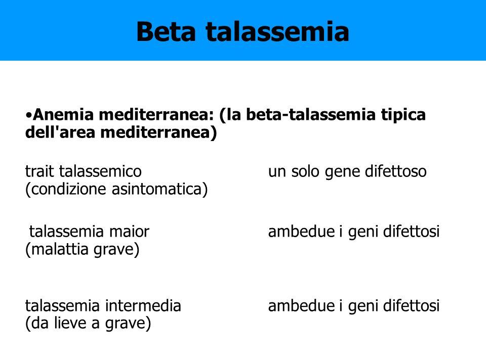 Beta talassemia Anemia mediterranea: (la beta-talassemia tipica dell'area mediterranea) trait talassemico un solo gene difettoso (condizione asintomat