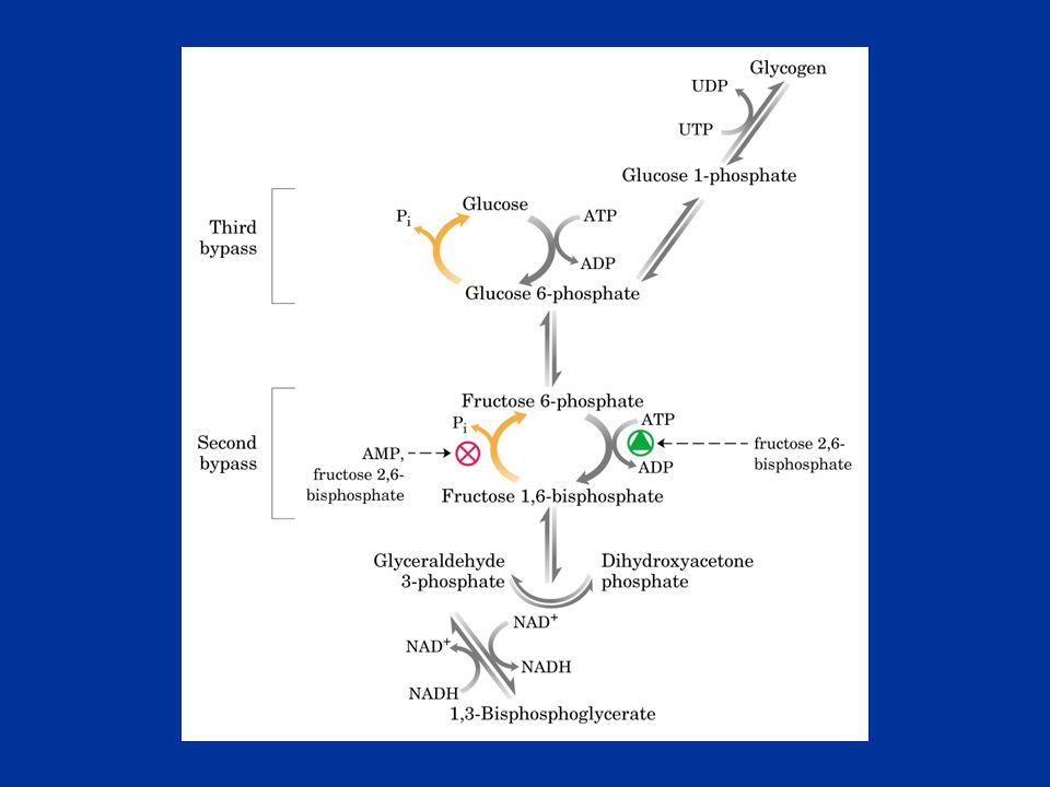 Catalizza lidrolisi del F-1,6-P a F-6P E regolato allostericamente da: citrato (attivatore) fruttoso-2,6-bisfosfato (inibitore) AMP (inibitore) Fructose-1,6-bisphosphatase II bypass Fruttoso 1,6 difosfato Fruttoso 6P