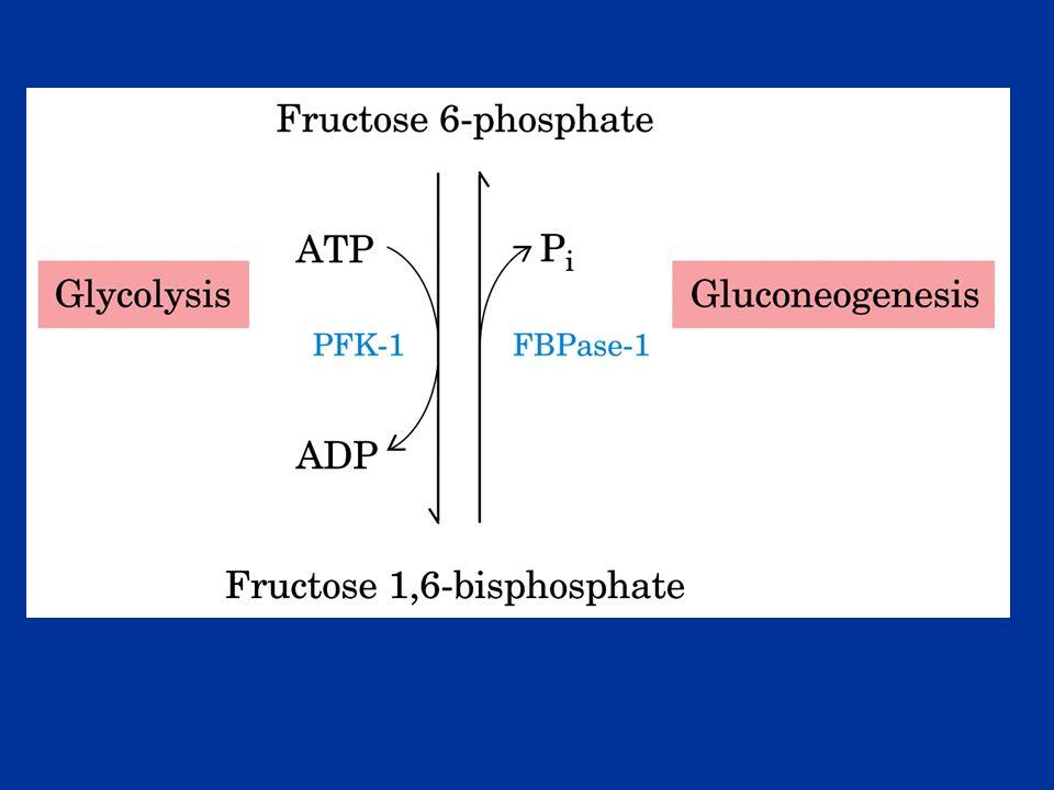 Converte il Glucoso-6-P in Glucoso Lenzima si trova sul reticolo endoplasmatico del fegato e del rene Il Glucoso-6P viene idrolizzato a Glucosio quando passa nel RE.