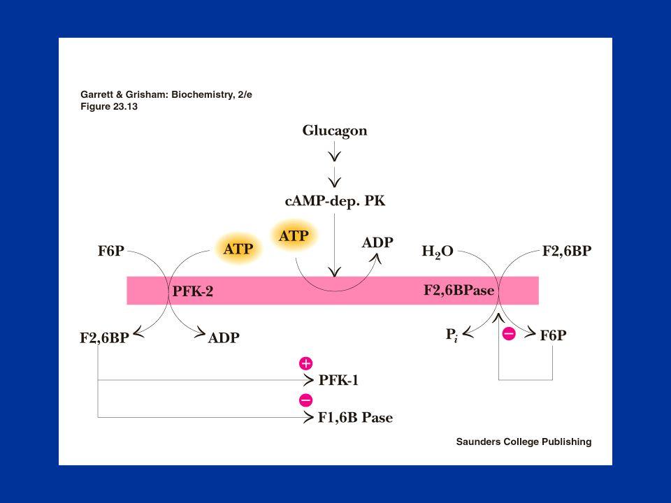 Il Ciclo dei Pentosi Fosfato