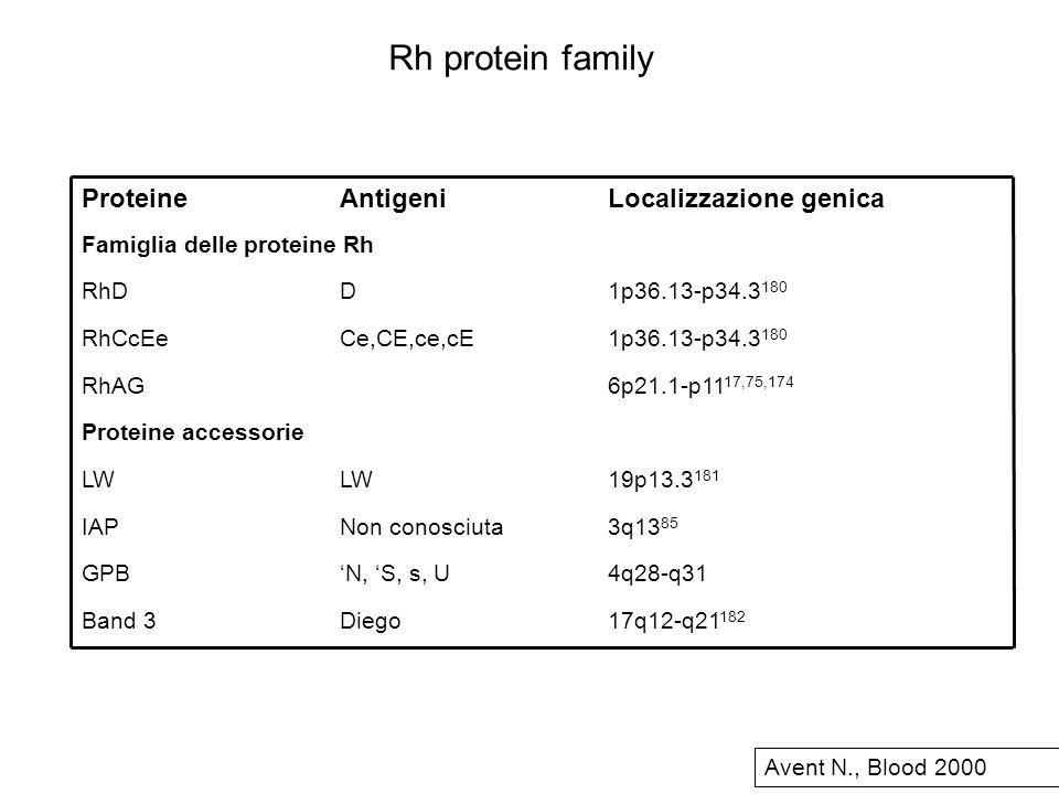 17q12-q21 182 DiegoBand 3 4q28-q31N, S, s, UGPB 3q13 85 Non conosciutaIAP 19p13.3 181 LW Proteine accessorie 6p21.1-p11 17,75,174 RhAG 1p36.13-p34.3 1