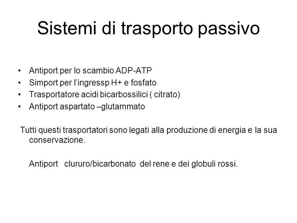 Sistemi di trasporto passivo Antiport per lo scambio ADP-ATP Simport per lingressp H+ e fosfato Trasportatore acidi bicarbossilici ( citrato) Antiport