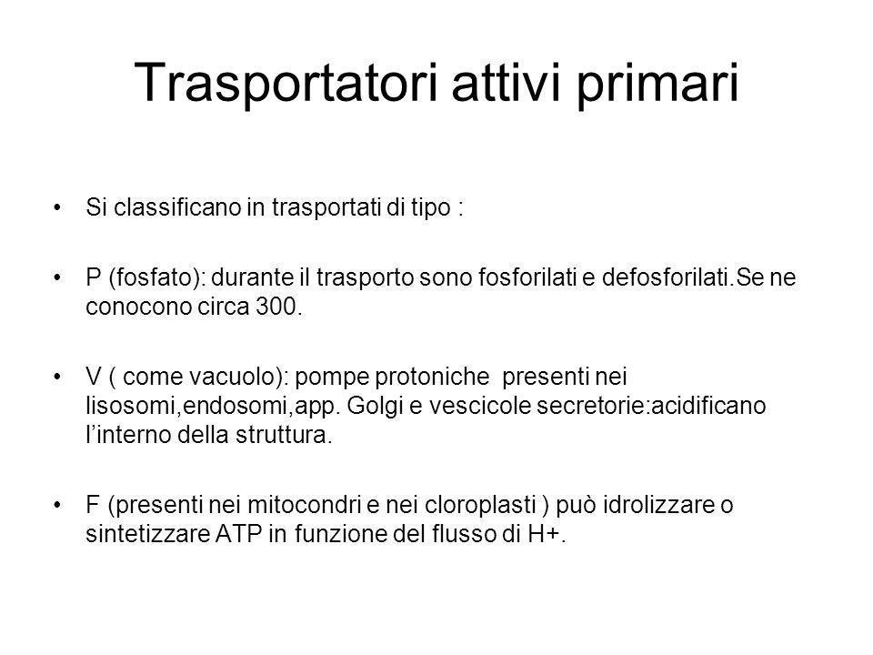 Trasportatori attivi primari Si classificano in trasportati di tipo : P (fosfato): durante il trasporto sono fosforilati e defosforilati.Se ne conocon