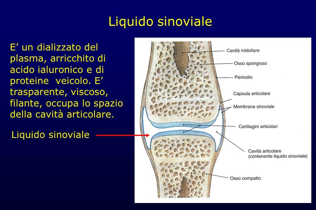 Liquido sinoviale E un dializzato del plasma, arricchito di acido ialuronico e di proteine veicolo. E trasparente, viscoso, filante, occupa lo spazio