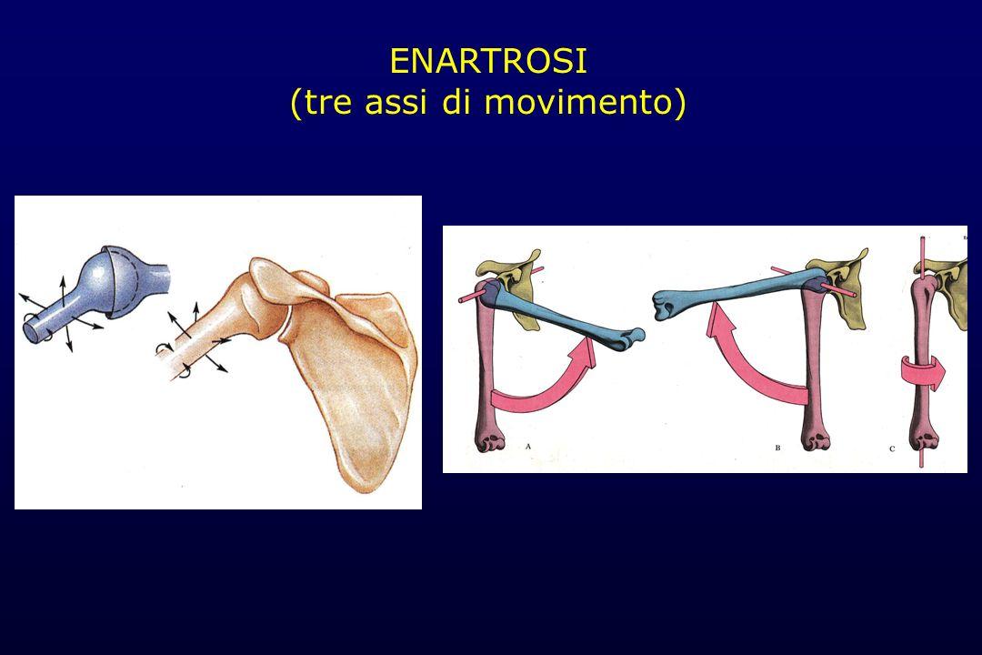 ENARTROSI (tre assi di movimento)