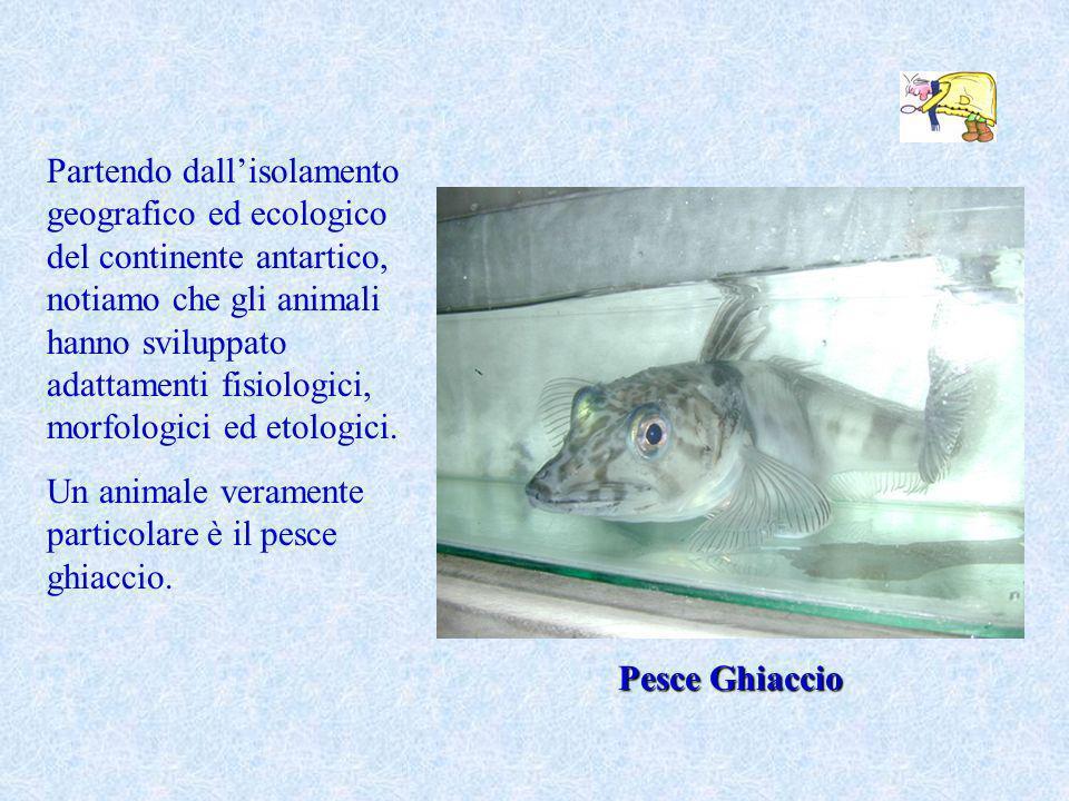Partendo dallisolamento geografico ed ecologico del continente antartico, notiamo che gli animali hanno sviluppato adattamenti fisiologici, morfologic