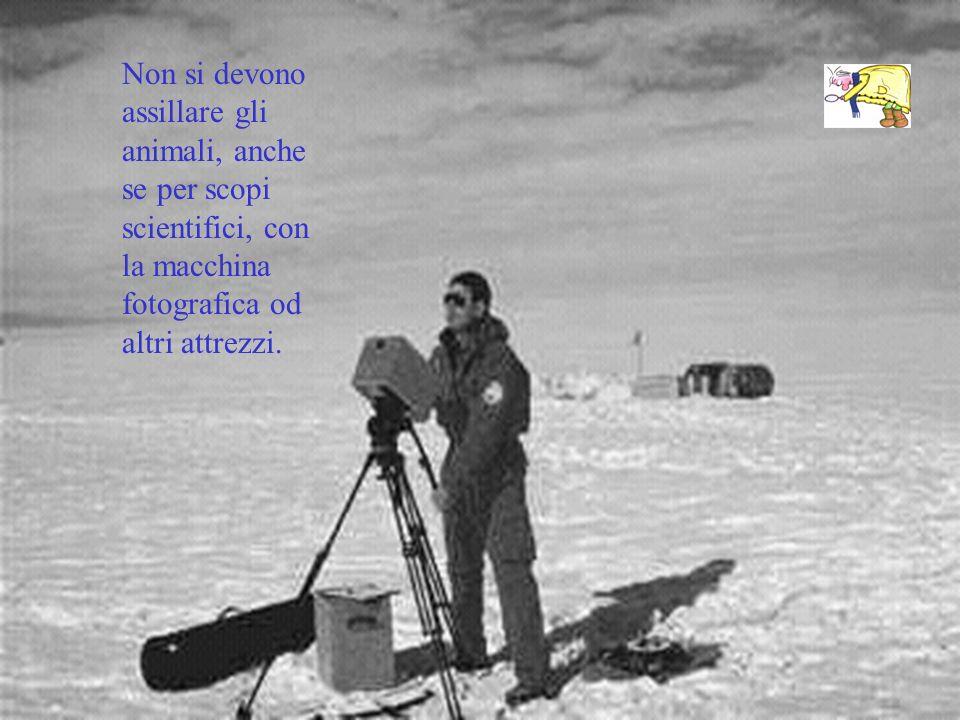 Non si devono assillare gli animali, anche se per scopi scientifici, con la macchina fotografica od altri attrezzi.