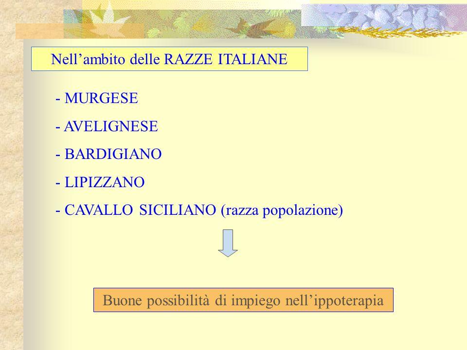 - MURGESE - AVELIGNESE - BARDIGIANO - LIPIZZANO - CAVALLO SICILIANO (razza popolazione) Nellambito delle RAZZE ITALIANE Buone possibilità di impiego n
