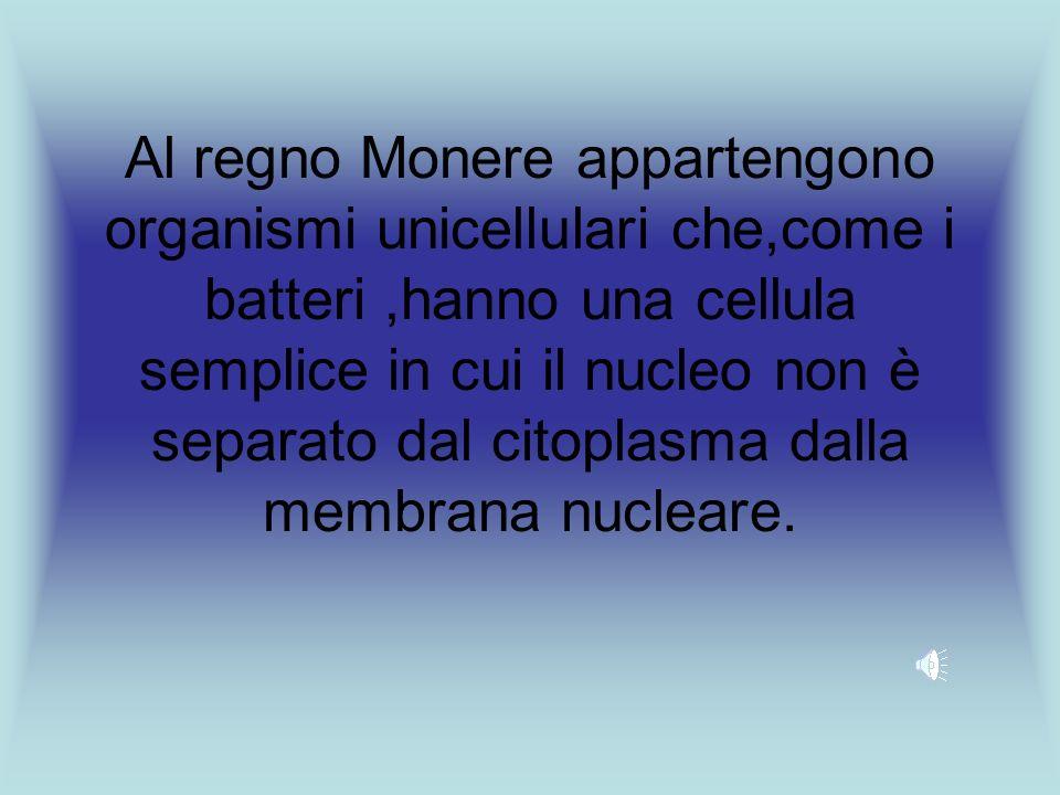 Al regno Monere appartengono organismi unicellulari che,come i batteri,hanno una cellula semplice in cui il nucleo non è separato dal citoplasma dalla membrana nucleare.