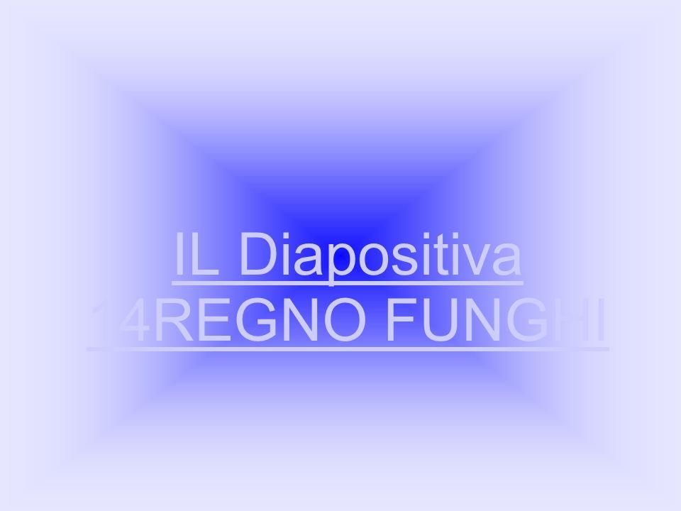 IL Diapositiva 14REGNO FUNGHI