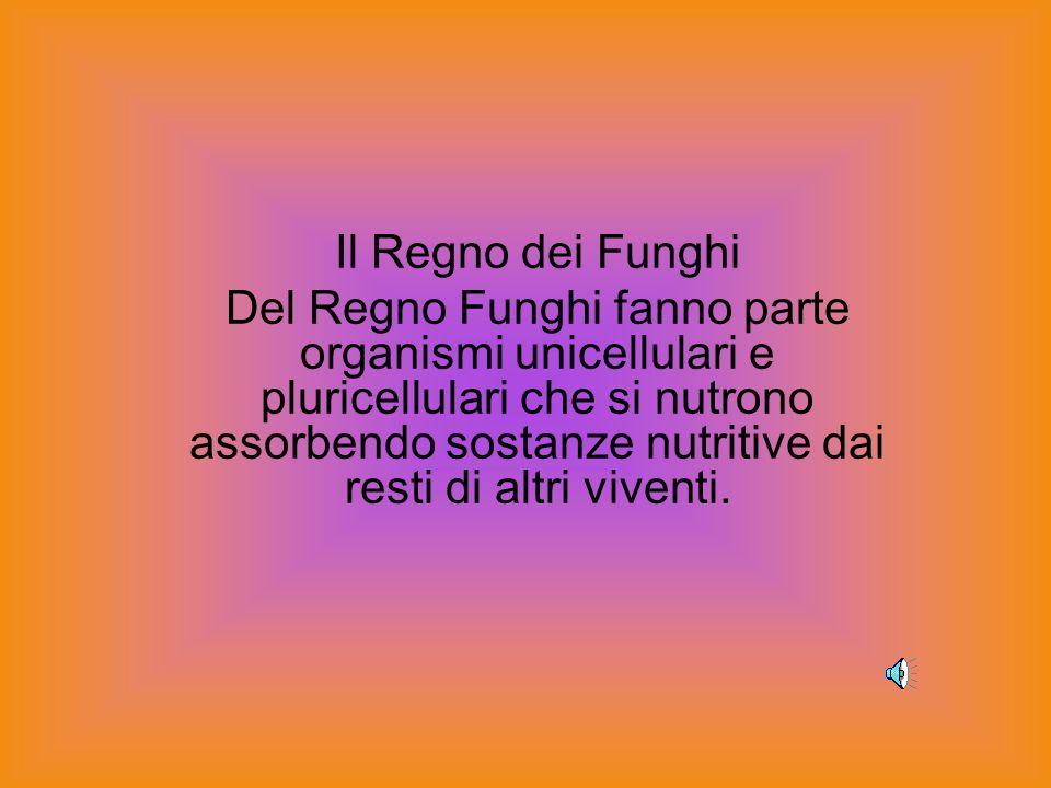 Il Regno dei Funghi Del Regno Funghi fanno parte organismi unicellulari e pluricellulari che si nutrono assorbendo sostanze nutritive dai resti di altri viventi.