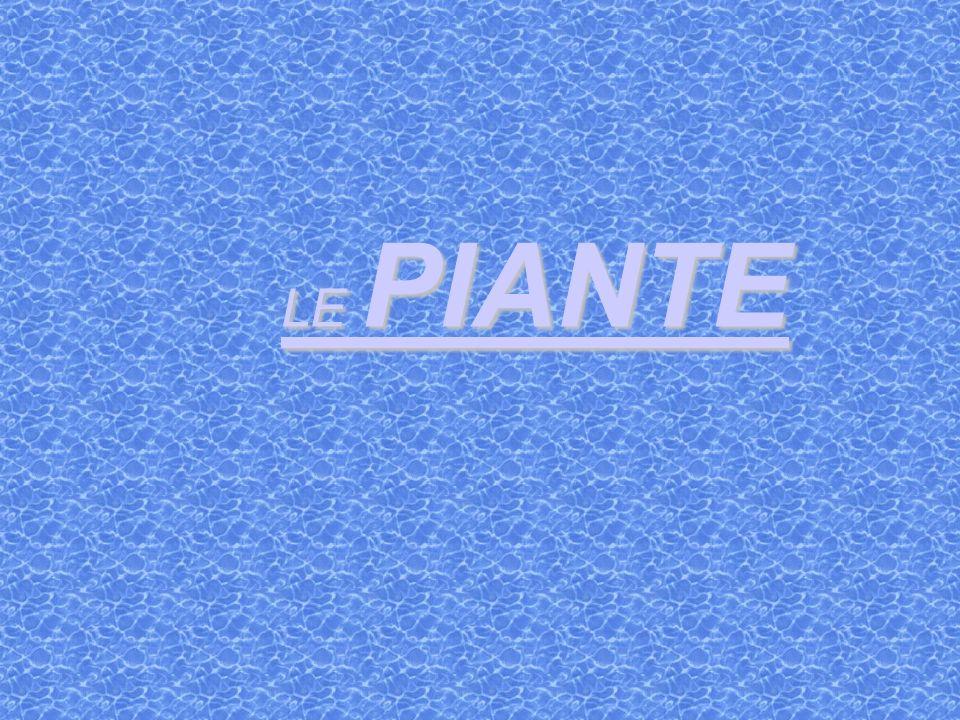 LE PIANTE LE PIANTE