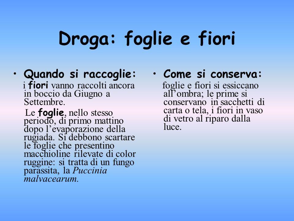 Dove si trova è largamente diffuso in tutta Italia fino alla zona montana; si trova un po dovunque nei luoghi incolti, nelle siepe, nei boschi e nelle macchie.