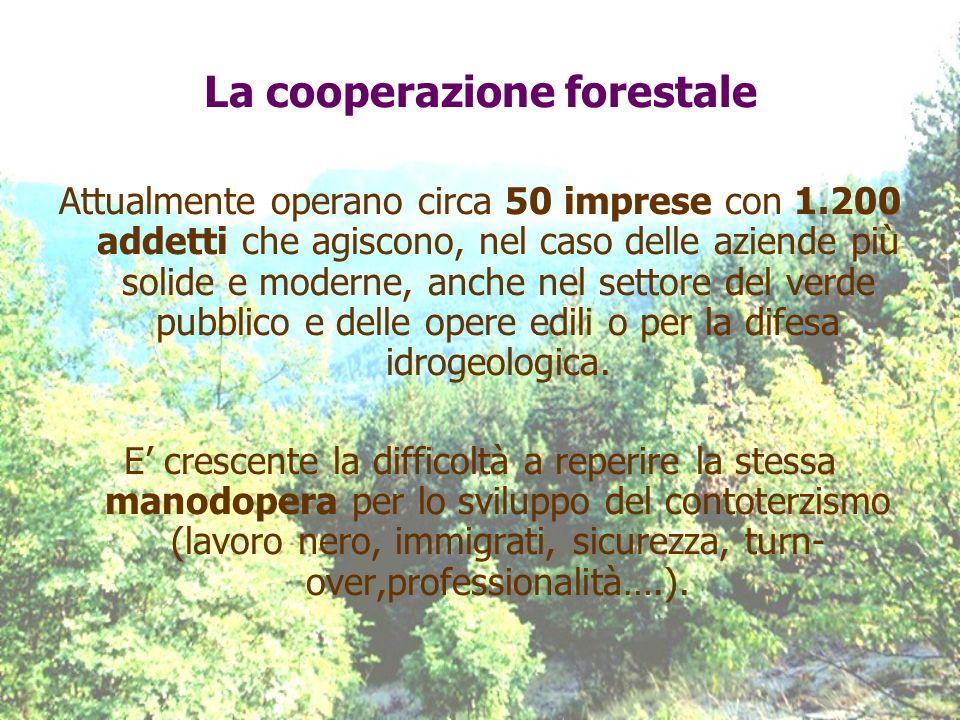 La cooperazione forestale Attualmente operano circa 50 imprese con 1.200 addetti che agiscono, nel caso delle aziende più solide e moderne, anche nel