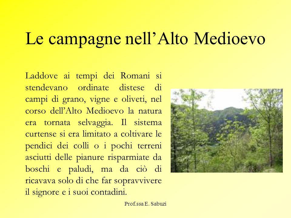 Le campagne nellAlto Medioevo Laddove ai tempi dei Romani si stendevano ordinate distese di campi di grano, vigne e oliveti, nel corso dellAlto Medioe