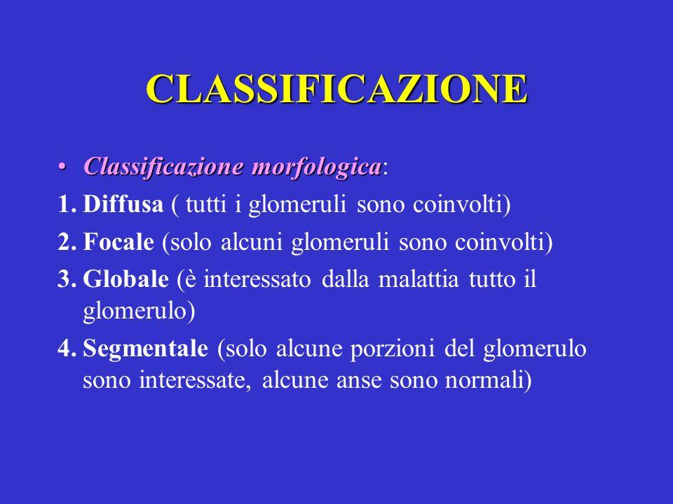 CLASSIFICAZIONE Classificazione morfologicaClassificazione morfologica: 1.Diffusa ( tutti i glomeruli sono coinvolti) 2.Focale (solo alcuni glomeruli
