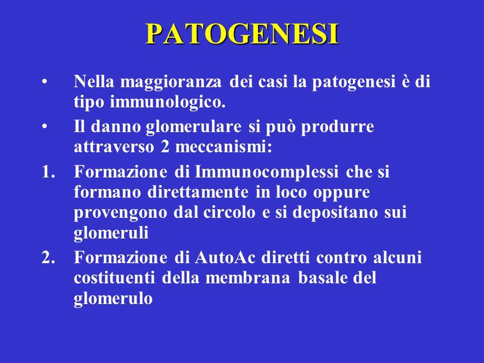 PATOGENESI Nella maggioranza dei casi la patogenesi è di tipo immunologico. Il danno glomerulare si può produrre attraverso 2 meccanismi: 1.Formazione