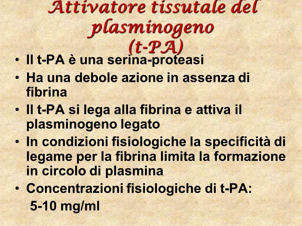 Attivatore tissutale del plasminogeno (t-PA) Il t-PA è una serina-proteasi Ha una debole azione in assenza di fibrina Il t-PA si lega alla fibrina e a