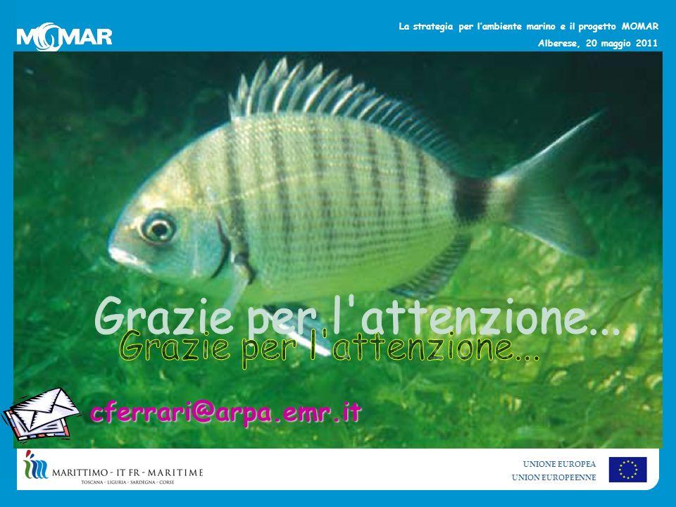 UNIONE EUROPEA UNION EUROPEENNE La strategia per lambiente marino e il progetto MOMAR Alberese, 20 maggio 2011 cferrari@arpa.emr.it
